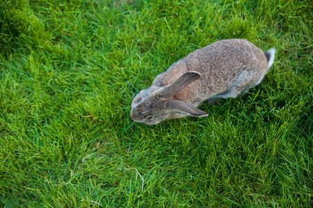 One rabbit eats grass in the garden view from above Zdjęcie Seryjne