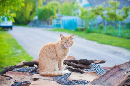 red-haired cat sitting on a summer wood Imagens