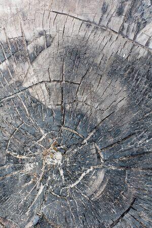 Natural Weathered Grey Tree Stump Cut Texture