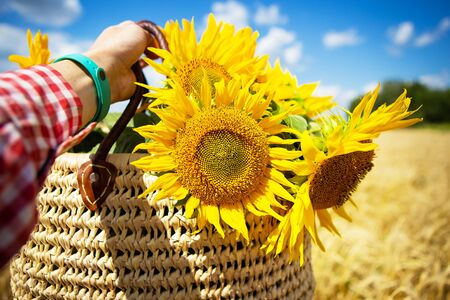Girl holds a bouquet of sunflowers in a straw bag on a background of a wheat field.