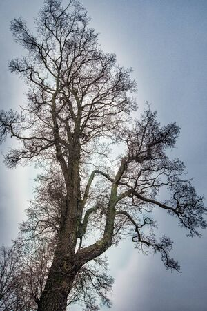 Beautiful branchy tree against the sky in Stockholm
