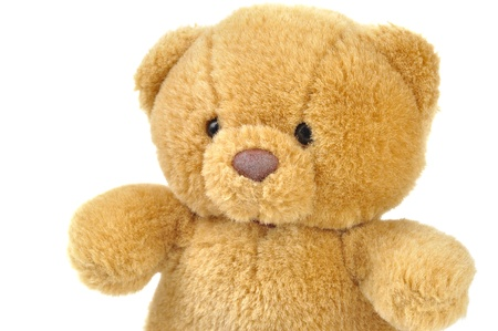 stuffed animals: Teddy bear on white background