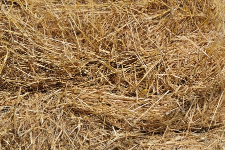 Hay bale background photo