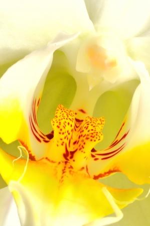 Colorfull orchidej makro, detailní Reklamní fotografie