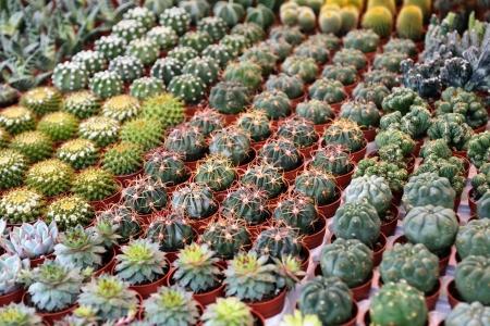 Různé druhy sukulentních rostlin na květinový trh, selektivní zaměření