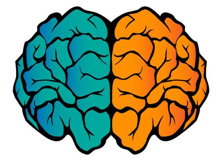 Graphics showing the human brain Illustration