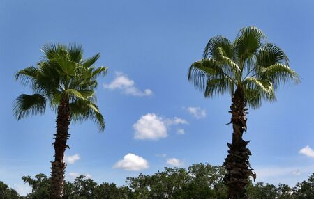 Two palm trees are backed by a blue sky. Stock Photo - 4068548