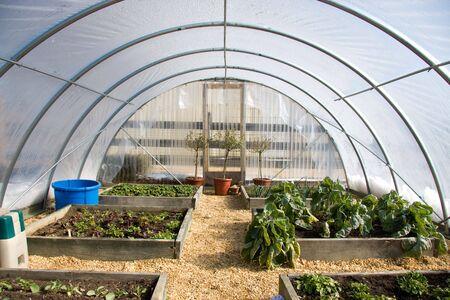 Una casa invernadero construido con tubos de aluminio y láminas de plástico se utiliza para cultivo de traspatio. Foto de archivo - 4296562