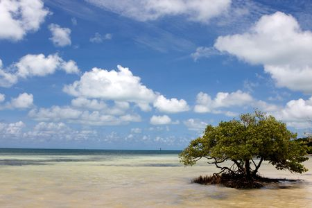 A lone Black Mangrove tree grows in the shallow water at Anne's Beach in the Florida Keys. Stock Photo - 6713316