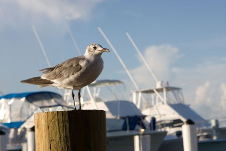 piling: A lone seagull rests on a piling at a marina with fishing boats in the background. Stock Photo