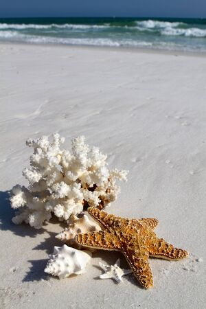 Collection of shells, coral and starfish sit on the beach with a background of blue water and breaking waves of foam on the beach at Destin, Florida. photo