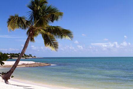 sandy: �rbol de Palma tropical se cierne sobre la playa en clave de marat�n en el centro de los Cayos de Florida. Un nadador solitario snorkels en la distancia.