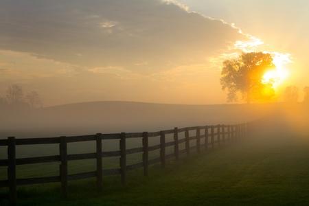 fenced: Sunrises over a foggy fenced pasture land behind a tree.