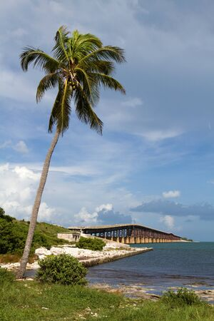 oversea: Coconut palm tree leans out over the water at Bahia Honda Key in the Florida Keys with an old bridge in the background.