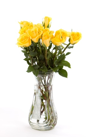 yellow roses: A dozen yellow friendship roses in a vase against a white background