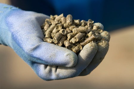 닫기 농장 동물에 공급되는 유기농 알팔파 펠렛을 들고 농부의 장갑 낀 손을 위로 스톡 콘텐츠