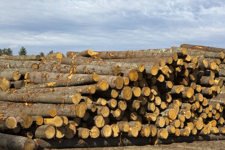 Logs for the timber and forestry industry are stored in stacks.