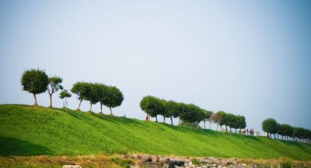 spaciousness: Line of trees. Bright blue sky on the background