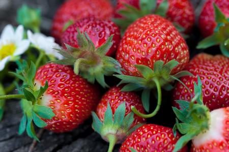 Strawberries lie on a wooden stump, minimalism, in nature.