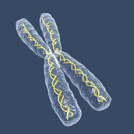 chromosome X photo