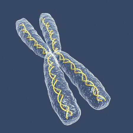 Cromosoma X  Foto de archivo - 413344