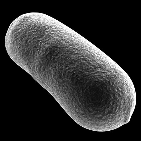 enteric: bacullus bacteria cell