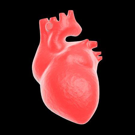 Anatomía del corazón humano  Foto de archivo - 936664