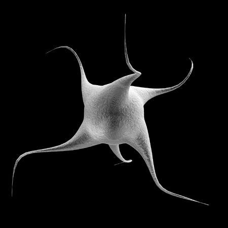 monella: nano celular  Foto de archivo