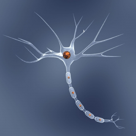 neuron cell over blue photo