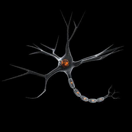 zenuwcel: neuron cel in zwart