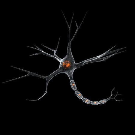 neuron cell over black photo