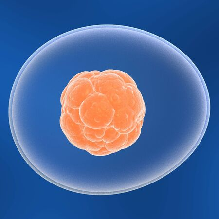 nucleic: 3d stem cell, core inside for medical