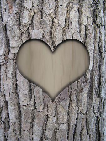 tree trunk bark of cinnamomum camphora and love heart photo