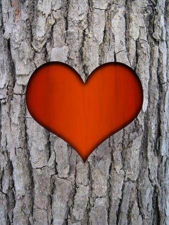 tree trunk bark of cinnamomum camphora and red love heart photo