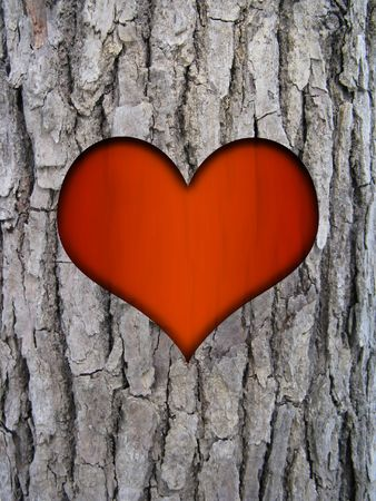 bark carving: tree trunk bark of cinnamomum camphora and red love heart Stock Photo