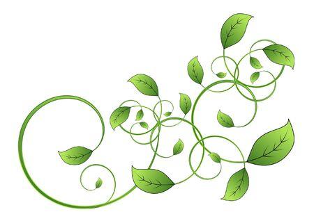 vid: la flora de hoja de vid aislados sobre fondo blanco Foto de archivo
