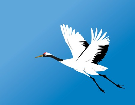 crane fly: chinese red-crowned crane fly in blue sky  Illustration