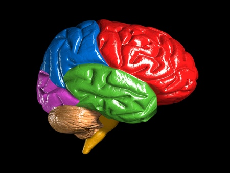 colorful brain model isolated on dark background photo