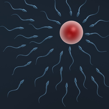 sex cell: sperm swimming to egg on dark blue background
