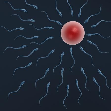 sperm swimming to egg on dark blue background Stock Photo - 8230452