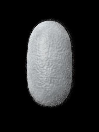 constraint: 3d render silkworm cocoon isolated on dark background Stock Photo