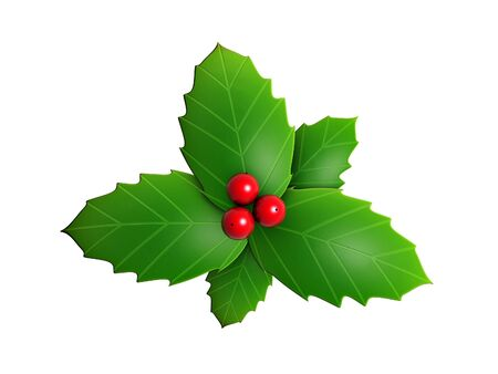 holly leaves: holly leaves and red berry isolated on white background