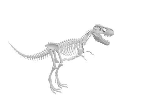tiranosaurio rex: blanco esqueleto de dinosaurio Tyrannosaurus aisladas sobre fondo blanco