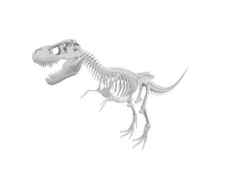 white tyrannosaurus Dinosaur skeleton isolated on white background