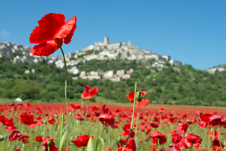 The blooming of the poppies in the town of Capestrano photo