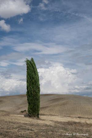 val dorcia: Cypress grove in Val dOrcia Stock Photo