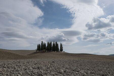 san quirico d'orcia: Cypress grove in Val dOrcia Stock Photo