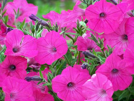 Bright Pink Flowers Banco de Imagens