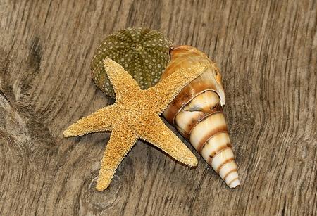 Starfish, sea urchin and sea shell arranged on a wood grain background. Imagens