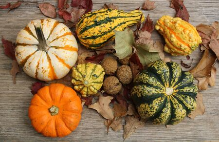 Little orange and white pumpkins, sycamore seed balls, yellow and green gourds and autumn leaves arranged on a burlap background.